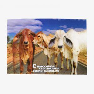 3D Postcard - Kangaroo